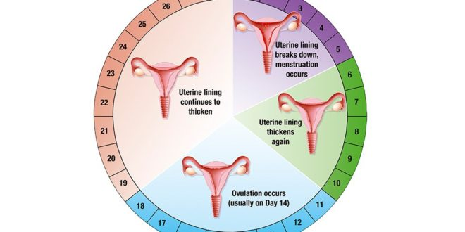 SIMPLE WAY TO CALCULATE YOUR MENSTRUAL CYCLE