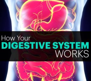ghana-360-express-how-your-digestive-system-works