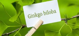 HOW GINKGO BILOBA BENEFITS BRAIN FUNCTION,ENERGY & FITNESS?